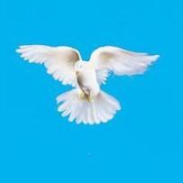 Pelo trabalho espiritual modificamo-nos…